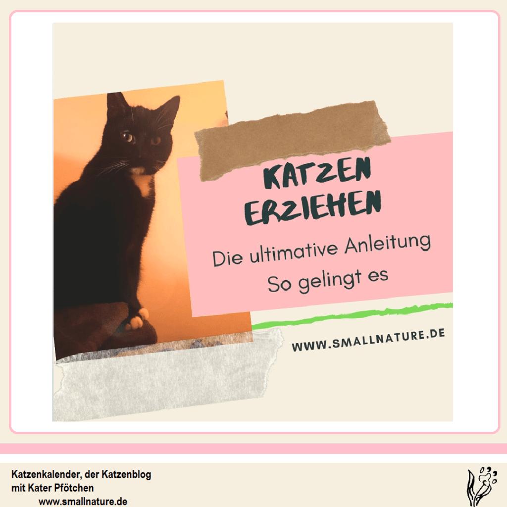 katzen-erziehen-katzenkalender