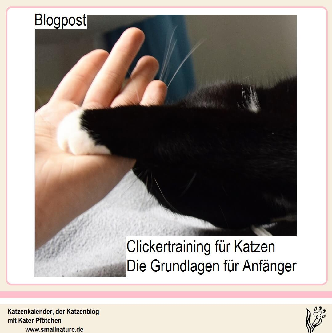 clickertraining-fuer-katzen