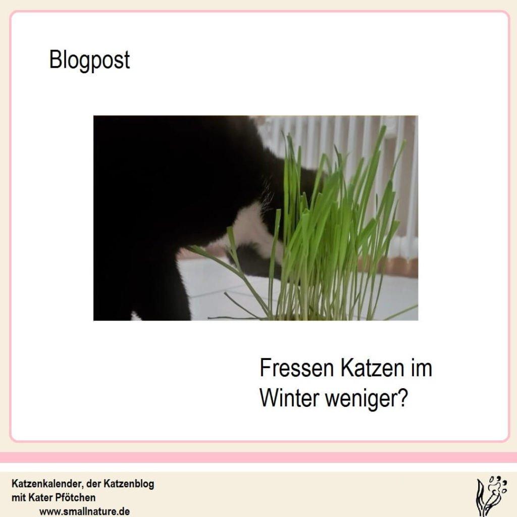 fressen-katzen-im-winter-weniger
