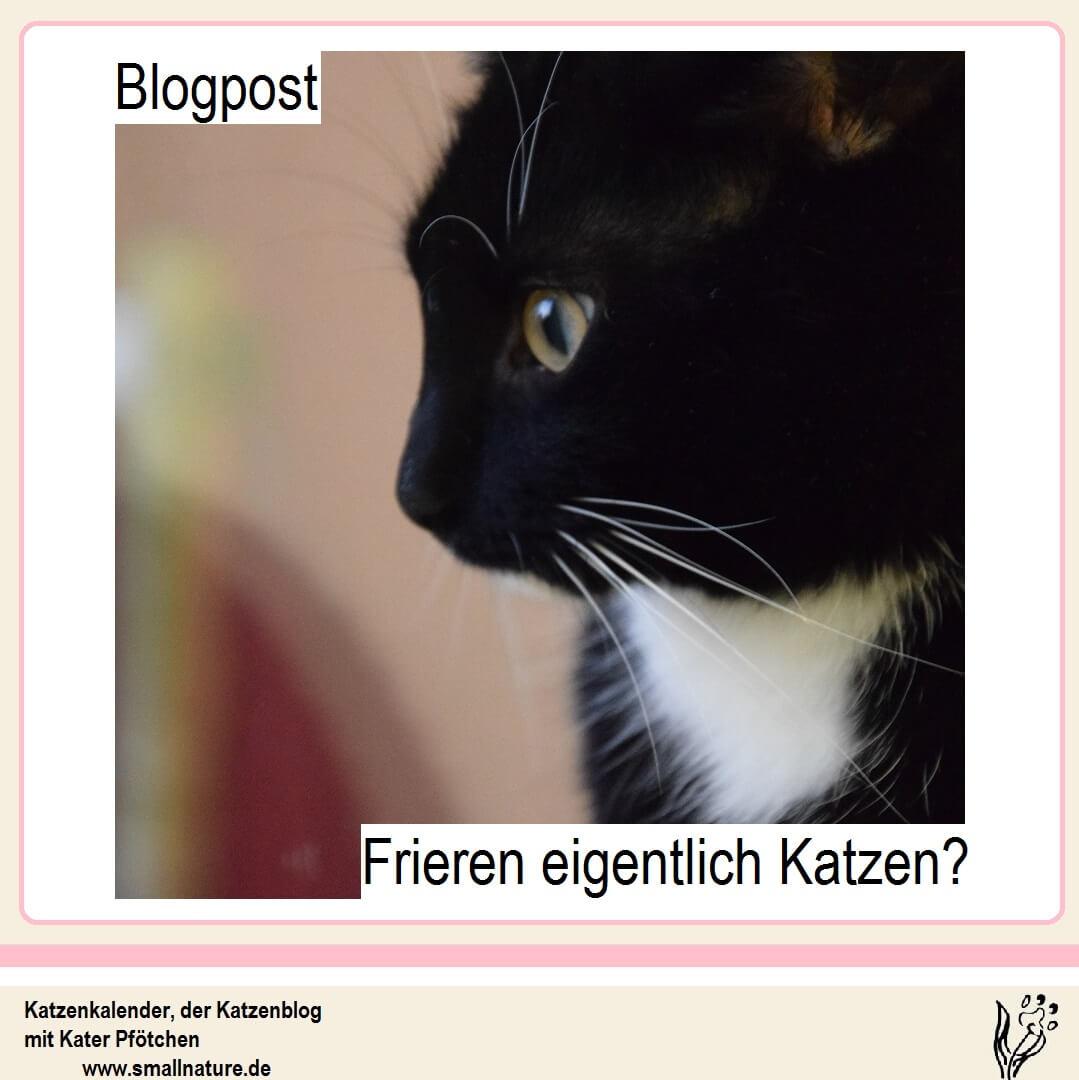 frieren-katzen