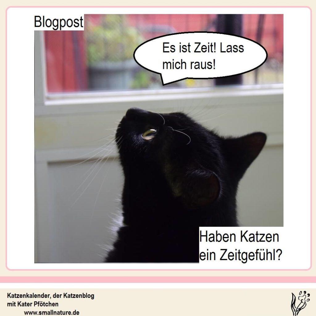 Haben-Katzen-ein-Zeitgefühl