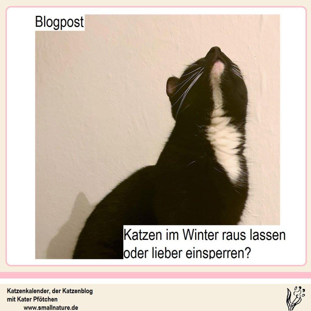 katze-im-winter-einsperren