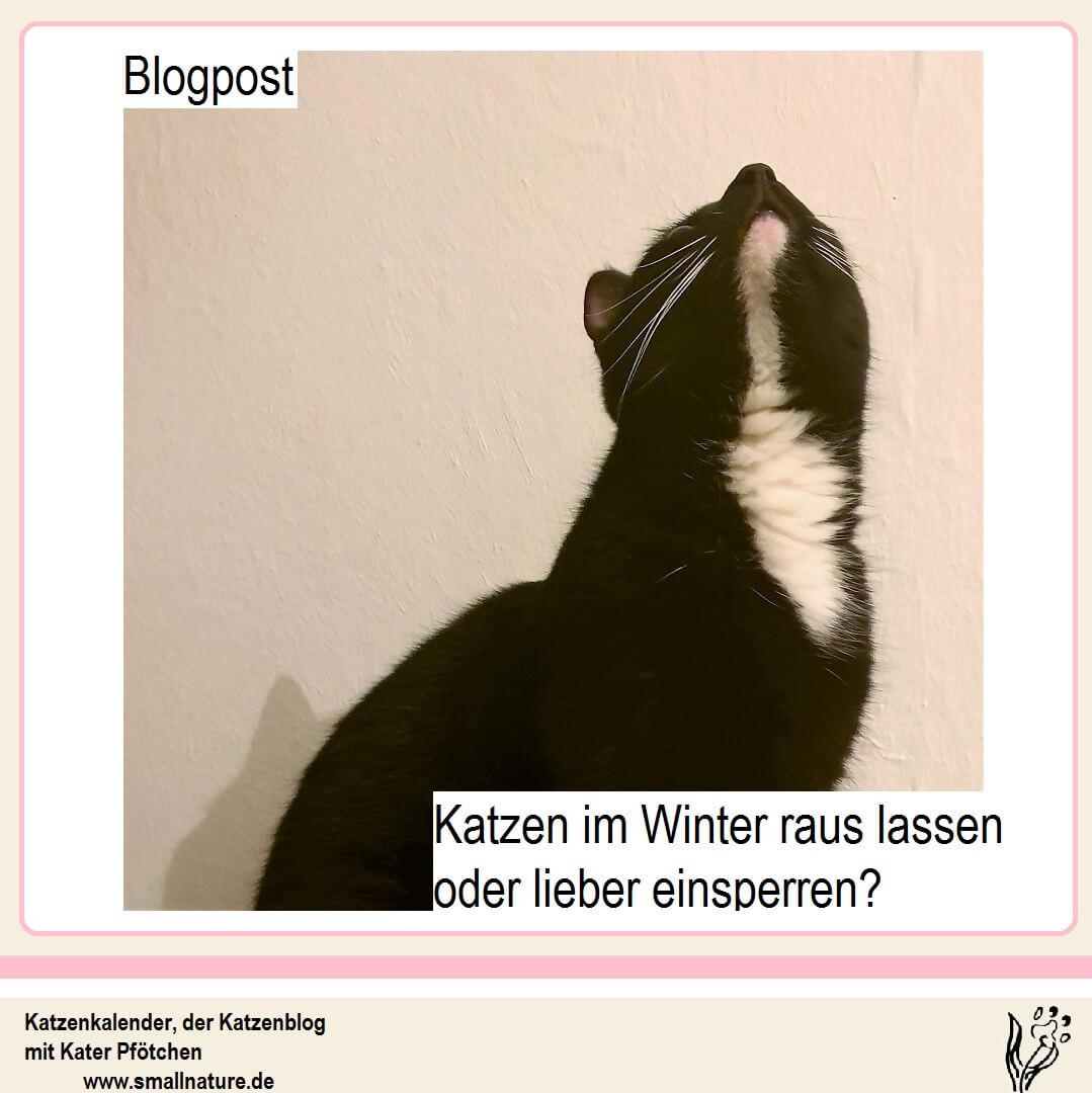 Katzen im Winter raus oder lieber einsperren? -> Tipps