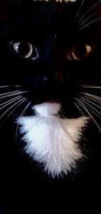 katzenblog-pfötchen