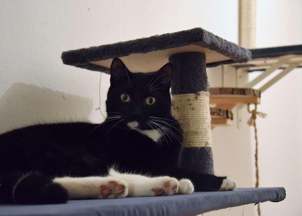 kater-pfötchen-auf-der-kletterwand-für-katzen-selber-bauen