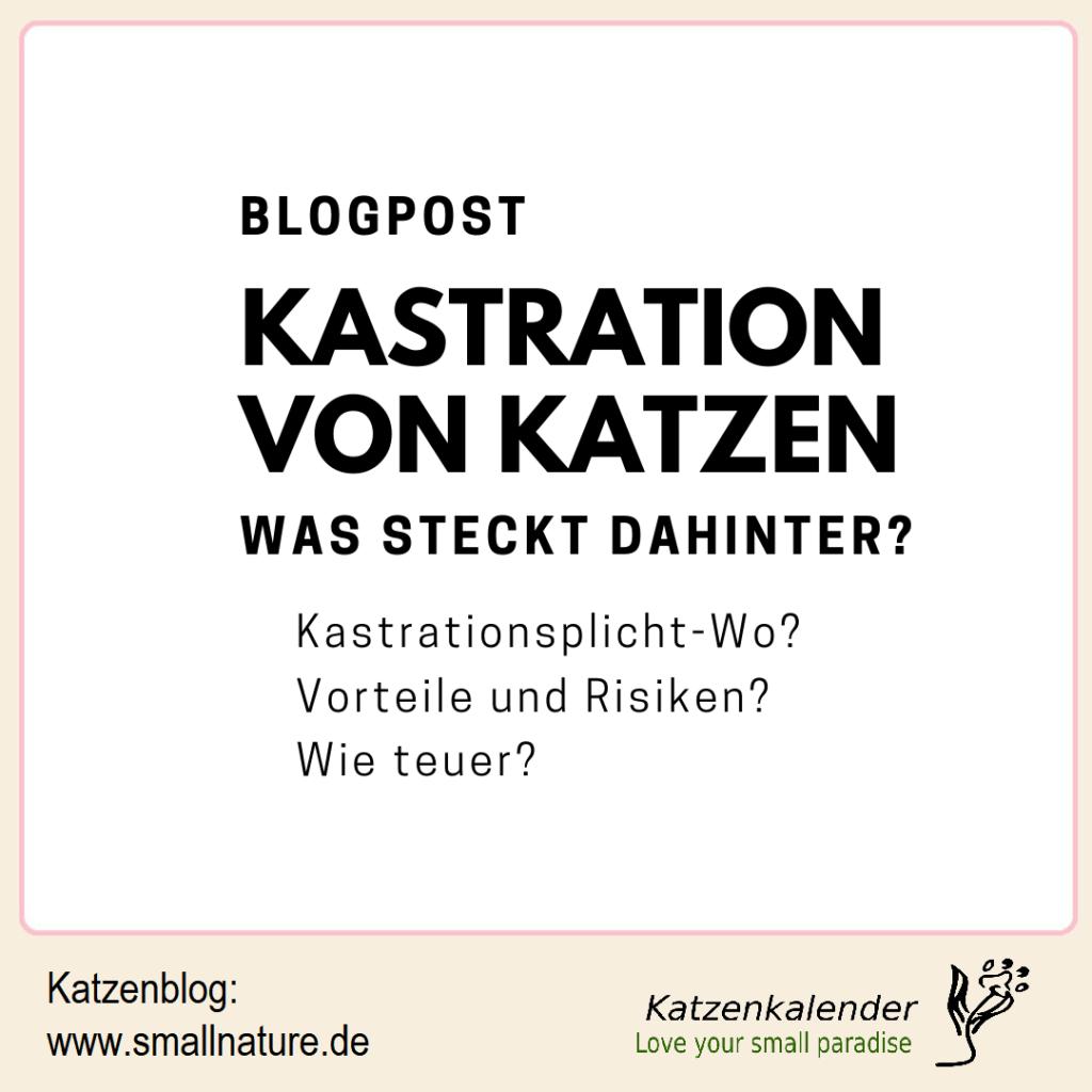 kastration-von-katzen