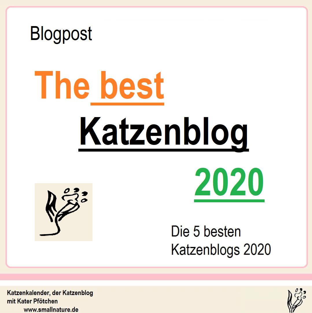 die-5-besten-katzenblogs-2020