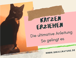 katzen-erziehen-ratgeber