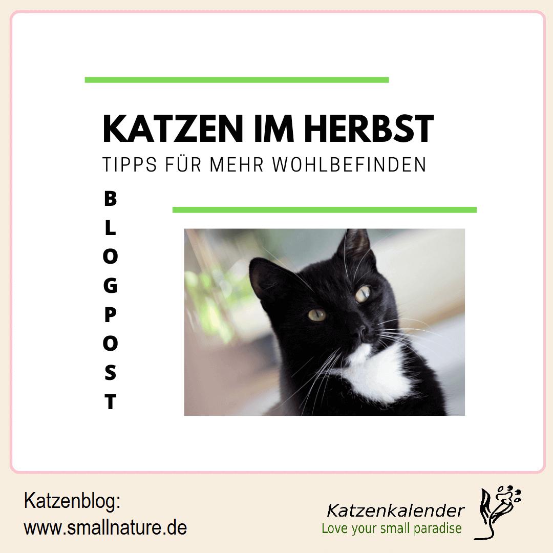 katzen-im-herbst-tipps