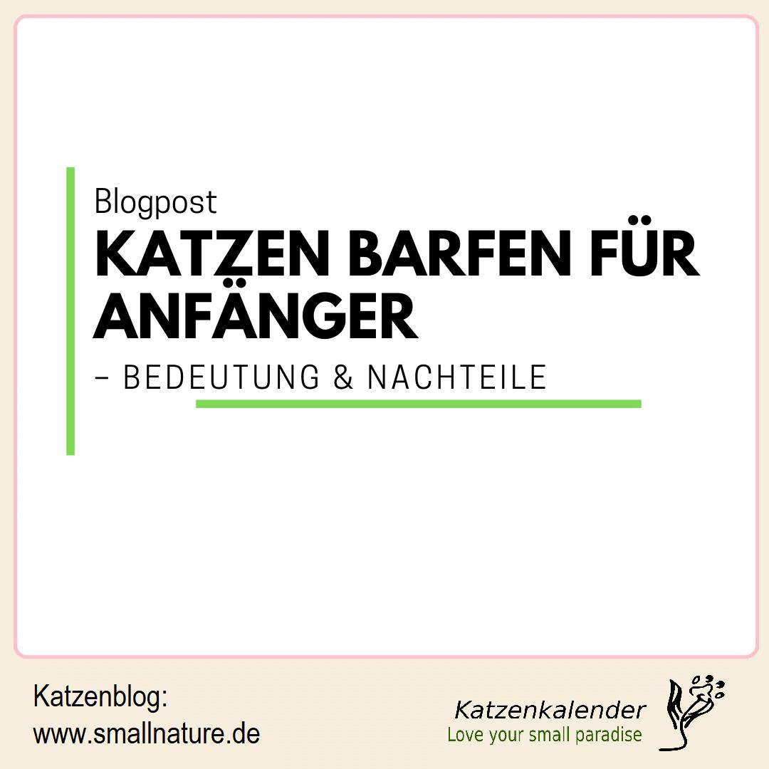 katzen-barfen-fuer-anfaenger