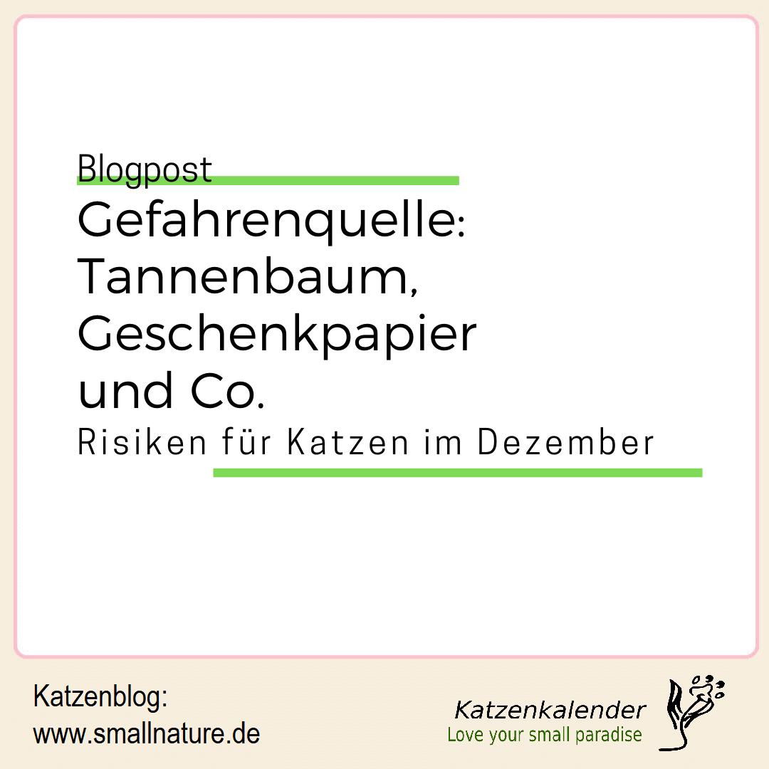 weihnachtsbaeume-fuer-katzen-giftig