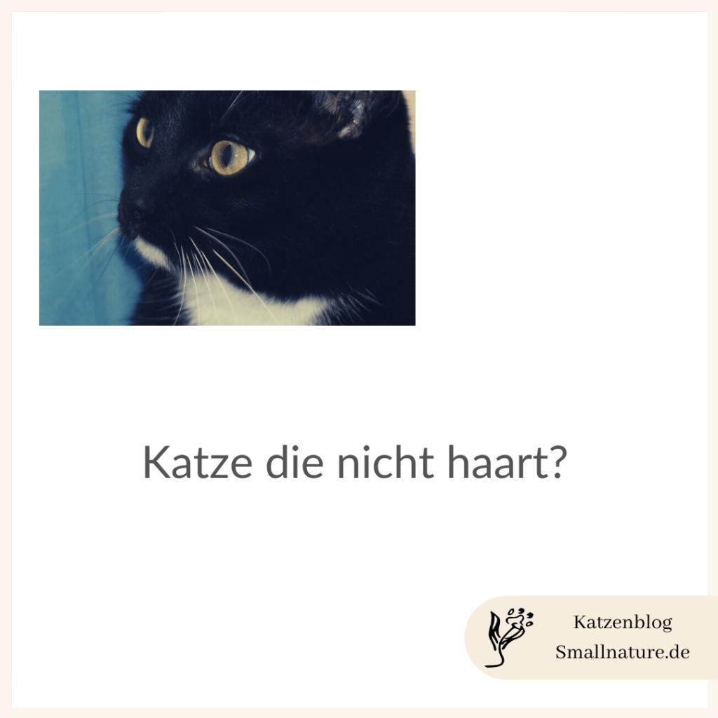 katze-die-nicht-haart