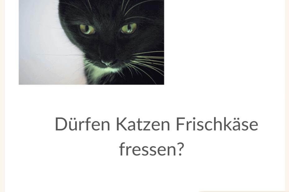 katzen-frischkaese