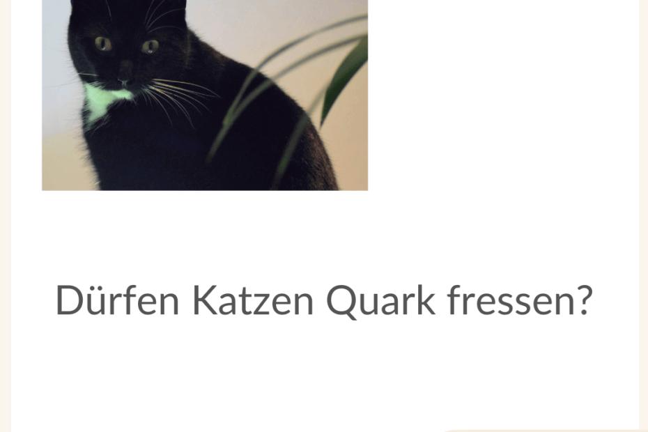 katzen-quark