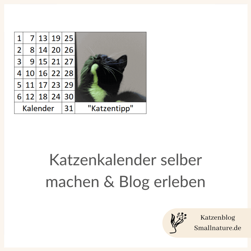 katzenkalender-selber-machen-blog