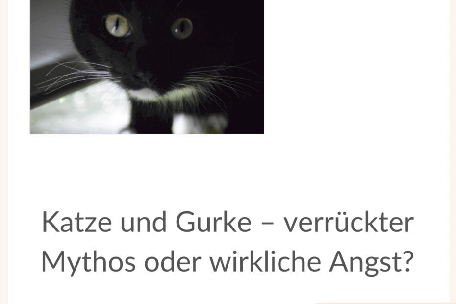katze-und-gurke