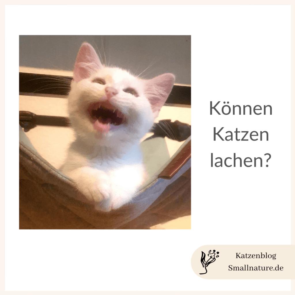können-katzen-lachen
