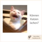 koennen-katzen-lachen