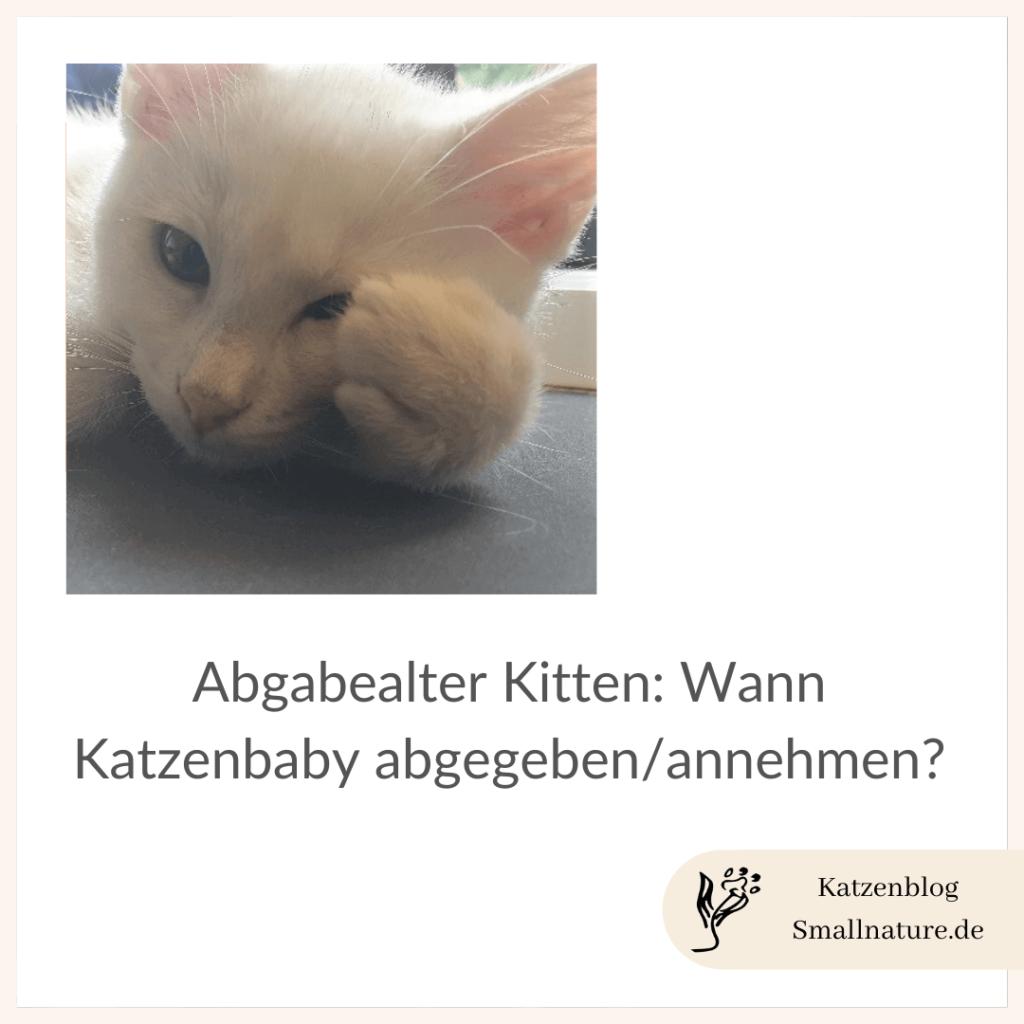 abgabealter-katze-kitten-abgeben-annehemen-wann