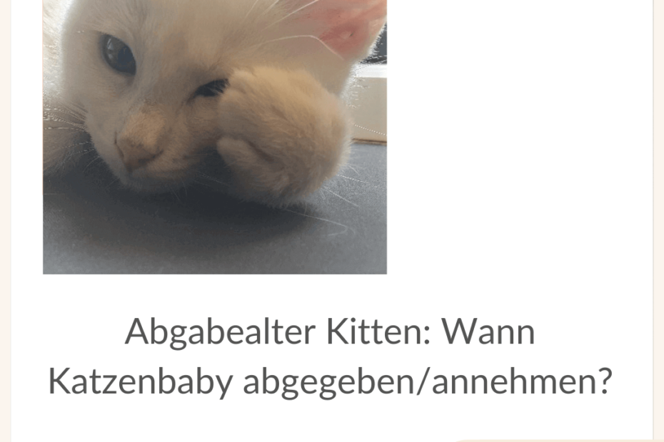 abgabealter-kitten-wann-katze-abgeben
