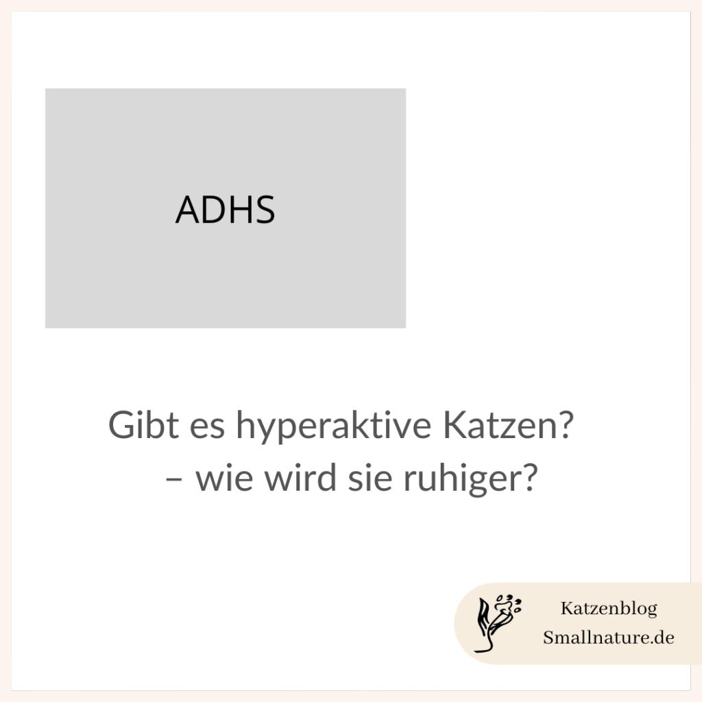hyperaktivitaet-katze-hayperaktiv-adhs