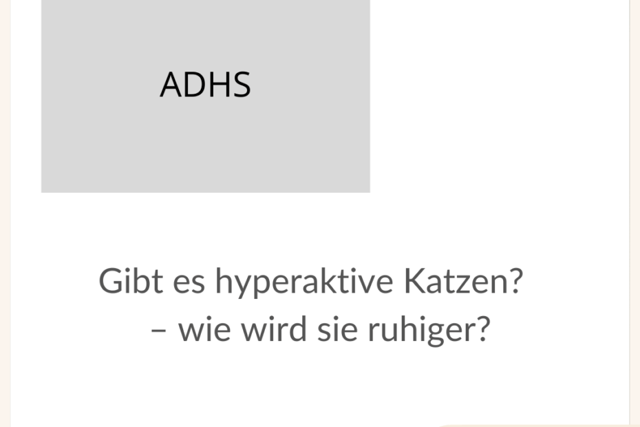adhs-hyperaktivitaet-katzen