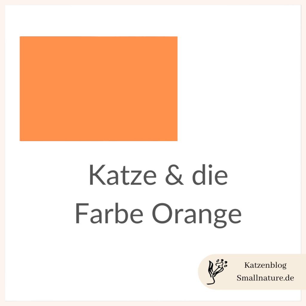 katze-orange
